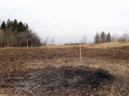 100 ozolu meža stādīšana Lūznavā_26