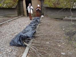 100 ozolu meža stādīšana Lūznavā_43