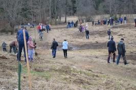 100 ozolu meža stādīšana Lūznavā_51