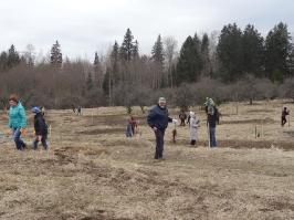 100 ozolu meža stādīšana Lūznavā_8